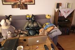 Katzentatze beim Fernsehen 2