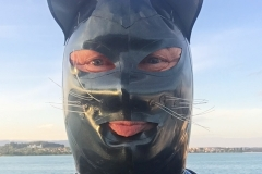 Katzentatze auf hoher See