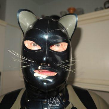 Das Leben einer Katze, eine Homestory